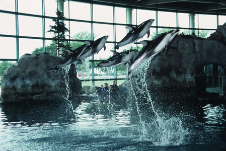 Shedd Aquarium Is The World 39 S Aquarium Opened In 1929 It